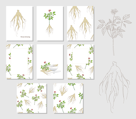 Set of templates with hand drawn Panax Ginseng and 2 seamless patterns. Ilustracja