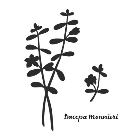 Bacopa monnieri isolated on white background vector illustration. Medicinal herb. Stok Fotoğraf - 129258533