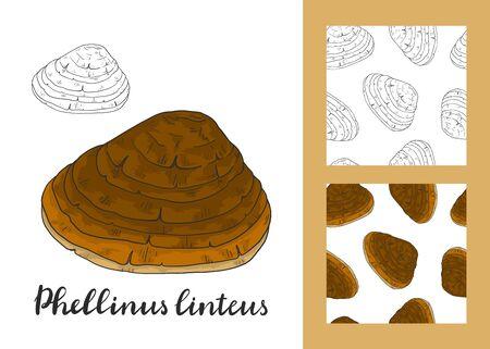 Phellinus linteus set with seamless patterns. Medicinal plant. Иллюстрация