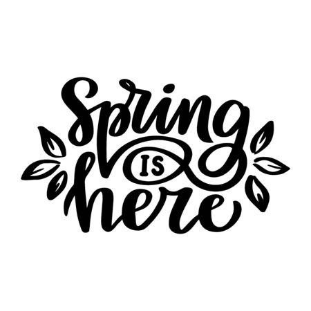 Spring is here. Hand drawn lettering phrase. Vector calligraphic illustration for greeting cards, posters, prints, t-shirts. 일러스트