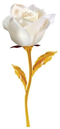 White rose on the golden stem - a fantastic white rose