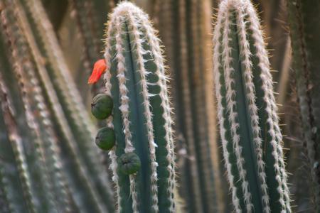 Cactus and needles Stock Photo