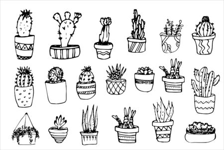 Succulent in pots painted black line on a white background. Vector drawing 스톡 콘텐츠