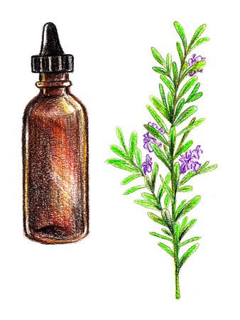 Rosemary essential oil, hand drawn with pencil. Leaves and flowers. Botanical and organic illustration. Zdjęcie Seryjne