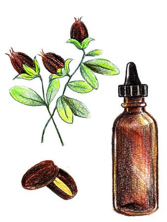 cosmetic jojoba oil, bottle with dropper. Hair care, face, hands and body. Aromatherapy, relaxation. Wellness centre, beauty. Hand drawn pencil illustration. Stock Photo