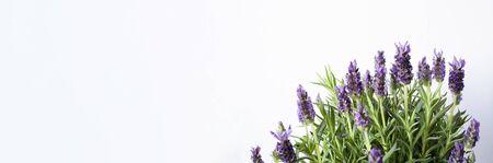 Banner with lavender,violet flowers, herbals,Copy space text gardening,plants. Standard-Bild