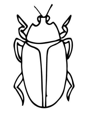 Beetle, insect outline vector, icon. Coloring page for kids. Exotic bug collection.hand drawn doodle style, Isolated on white background.