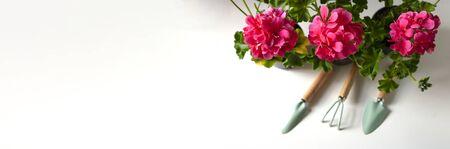 Red geranium flower.Balcony plant, home garden tools. Close up. Banner.