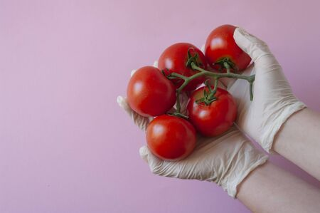 Hand in rubber gloves holding tomatoes, pink background. Copy space. Banque d'images