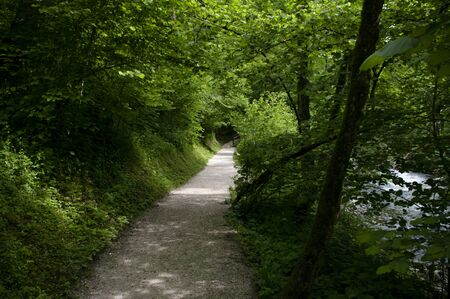 national park of Slovenia, road through forest trees, spring time. Promenade in mountains. 写真素材