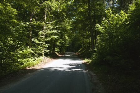 Deep forest trees, asphalt road goes through green bushes. Background with landscape.