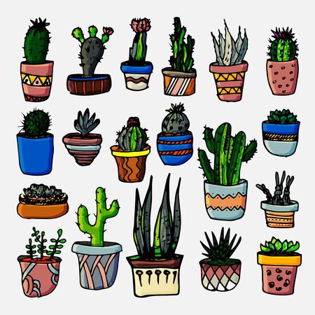 Cactus and succulents vector set. Hand drawn illustration. Tropical plants. Botanical graphic design. Stickers.