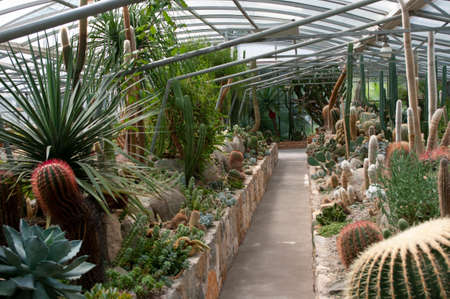 Big garden of cactuses and succulents, collection of diffrent green plants.