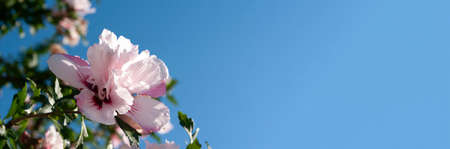 Web banner with pink flower above blue sky 免版税图像
