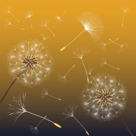 Abstract background of a dandelion for design.   Vector illustration.