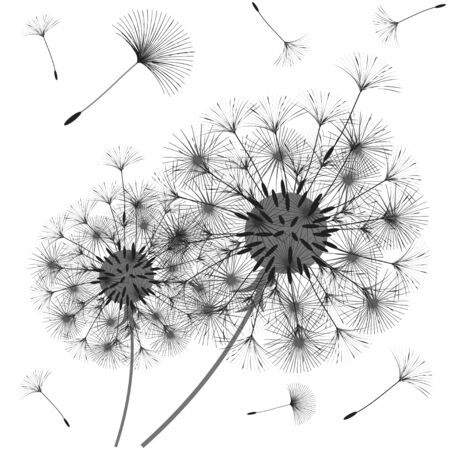 Abstract design of the dandelion while the wind is blowing the seeds.