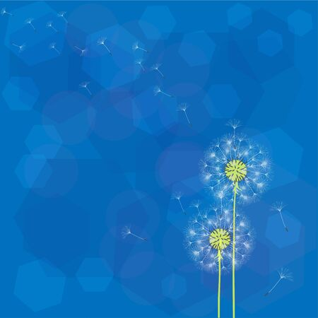 Abstract background of a dandelion for design. The wind blows the seeds of a dandelion.