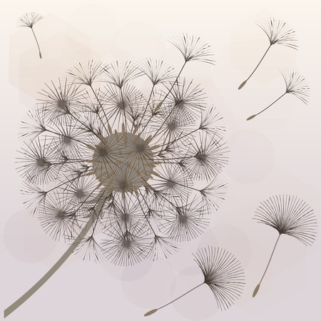 Abstract background of a dandelion for design.  The wind blows the seeds of a dandelion. Template for posters, wallpapers, posters. Vector illustrations.