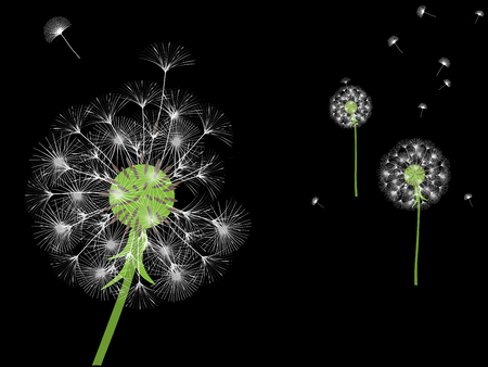Dandelion background for your design. The wind blows dandelion seeds. Template for posters, wallpapers, cards. Vector illustration. Vettoriali