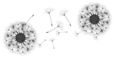 Dandelion background for your design. The wind blows dandelion seeds. Natural background. Advertising flyer brochure. Vector template. Ilustracja