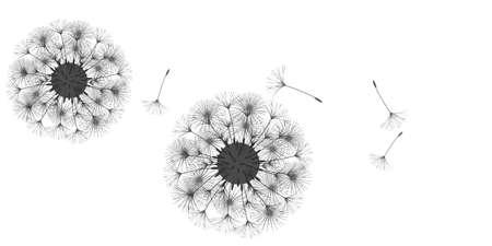 Dandelion background for your design. The wind blows dandelion seeds. Floral background. Advertising flyer brochure. Vector template. Ilustração