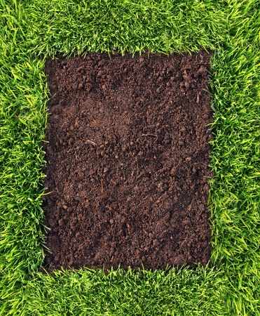 turf: Healthy grass and soil background