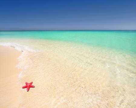 Starfish on a beautiful beach  Stock Photo - 16738969