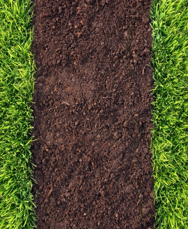 Healthy grass and soil background