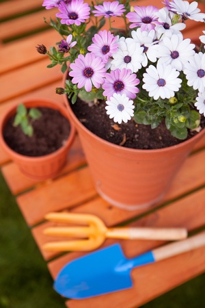 Spring in the garden, potting flowers  photo