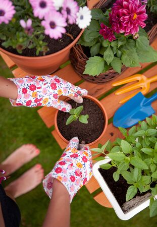 gardening tools: Spring in the garden, potting flowers  Stock Photo