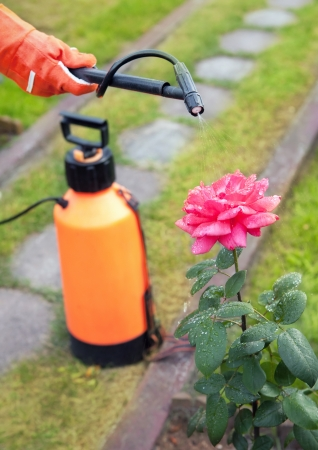 insecticidal: Protecting plant from vermin with pressure sprayer