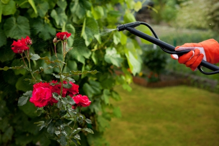 exterminator: Protecting plant from vermin with pressure sprayer