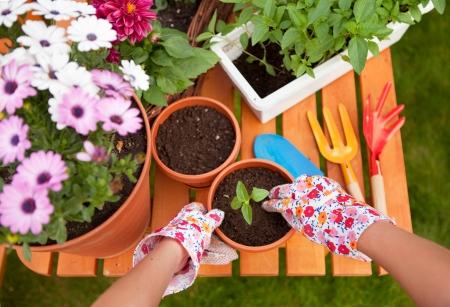 jardinero: Primavera en el jard?n, macetas y flores Foto de archivo
