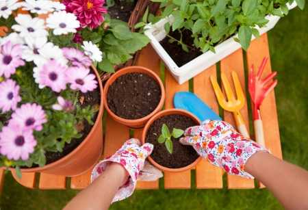 garden tool: Spring in the garden, potting flowers Stock Photo