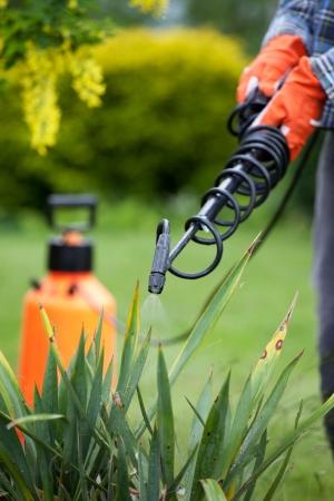 La protección de la planta de yuca de la enfermedad fúngica, concepto de jardinería