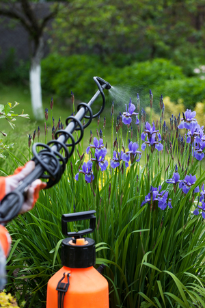 insecticidal: Protecting flower plant from fungal disease, gardening concept Stock Photo