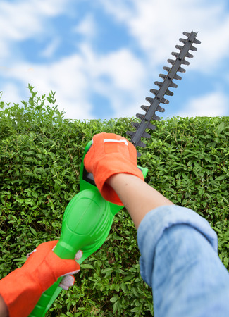 Woman trimming bushes using an electrical hedge trimmer, gardening concept