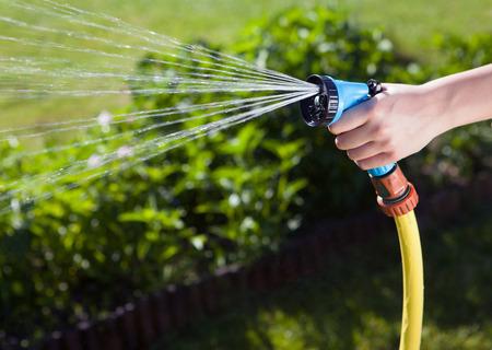 mangera: Mano femenina regar las plantas con una manguera de jardín con aspersores