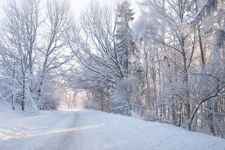 covered in snow: Empty snow covered forest road in winter landscape