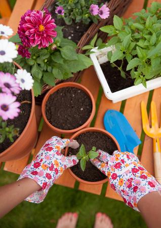 Gartenarbeit Konzept, barfuß Frau Vergießen Blumen Standard-Bild