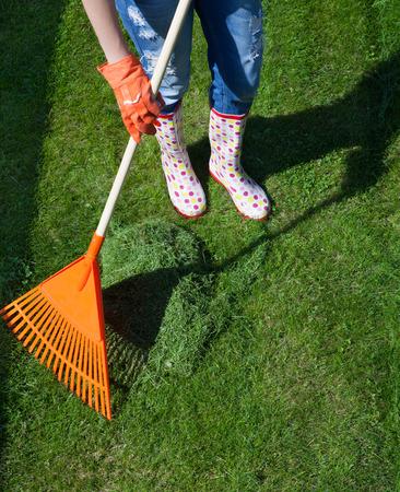 cut grass: Woman raking freshly cut grass in the garden