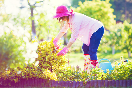 wellies: Woman wearing wellies, hat and gloves with pruning shears cutting evergreen bittersweet shrub plant. Maintenance gardening concept.