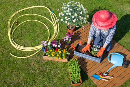 marguerite: Woman sitting on the lawn, wearing gloves, straw hat potting flowers. Gardening concept. Stock Photo