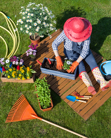 Frau sitzt auf dem Rasen, Handschuhe, Strohhut Blumenerde Blumen tragen. Gartenarbeit Konzept Standard-Bild - 74620187