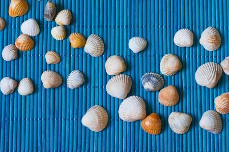 bamboo mat: shells on the blue bamboo mat