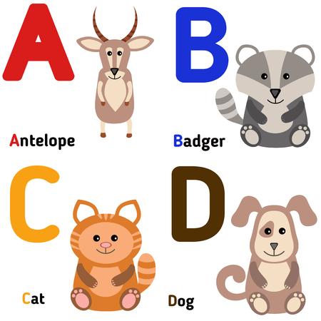 alfabeto con animales: alfabeto zoológico lindo en el vector. A B C D. animales de dibujos animados divertidos: antílope, tejón, gato, perro.