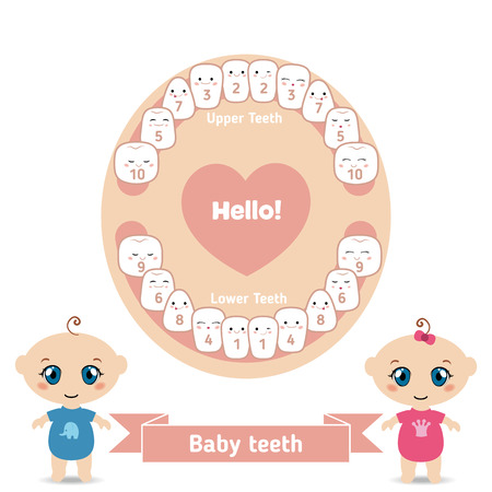 Temporary teeth - names, groups, period of eruption and shedding of the children.