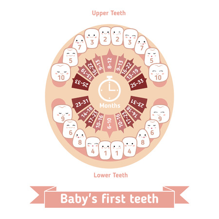 shedding: Temporary teeth - names, groups, period of eruption and shedding of the children.