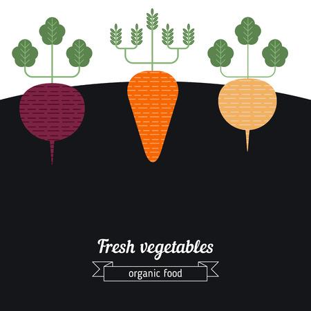 beets: Beets, Carrots, Turnips vegetables illustration. Vegetables garden background.