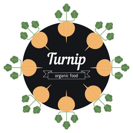 turnip: Turnip vegetables illustration. Healthy Organic vegetarian food. Illustration